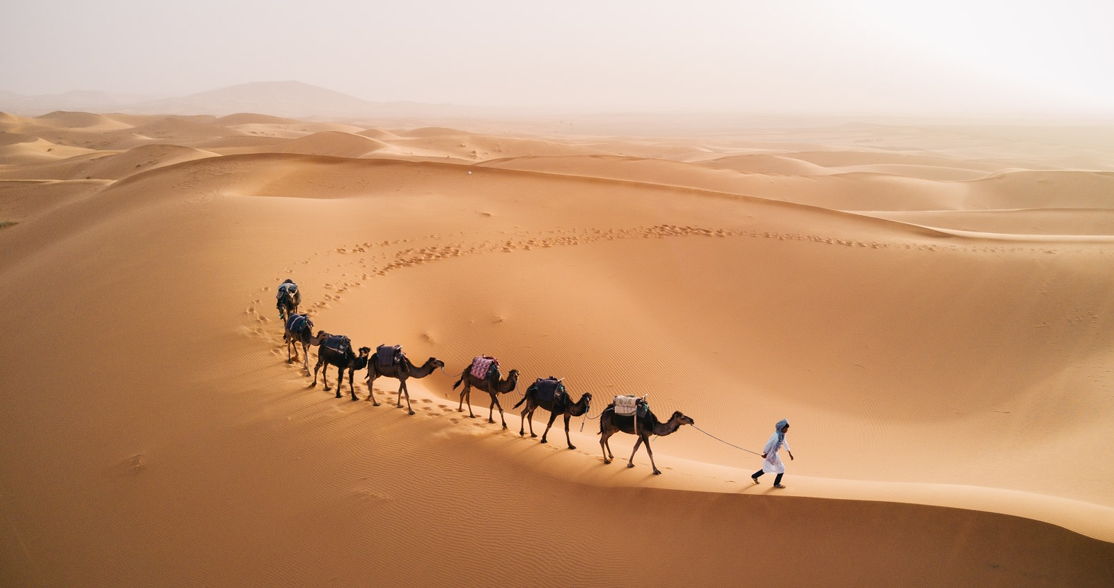 Enchanting Travels - Morocco Tours -Tuareg with camels walk thru the desert on the western part of The Sahara Desert