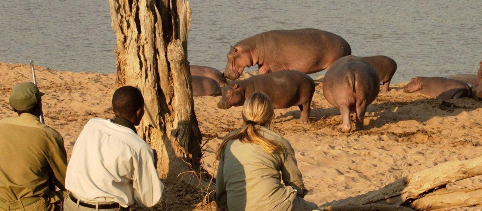 Zambia: Victoria Falls and Safari Highlights Tour Trip 5