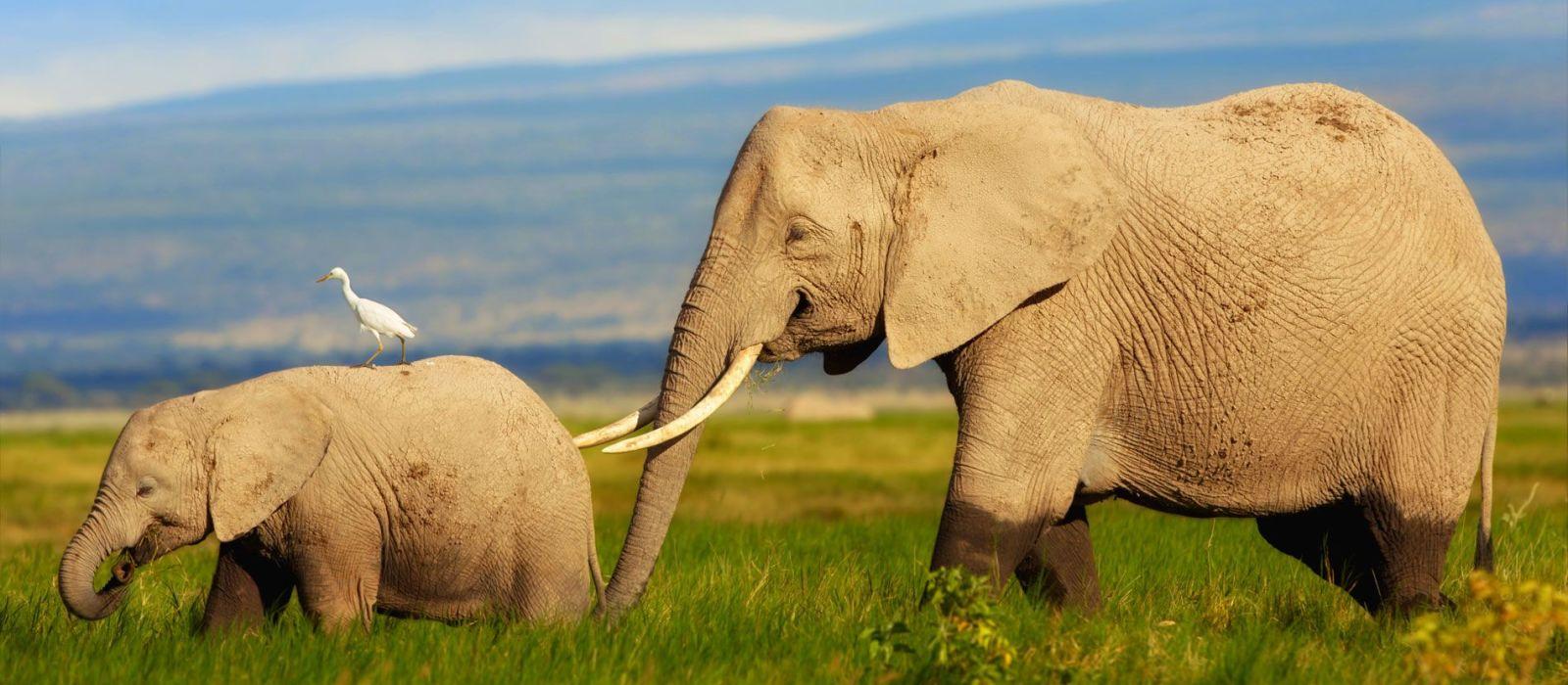 Reiseziel Amboseli Kenia