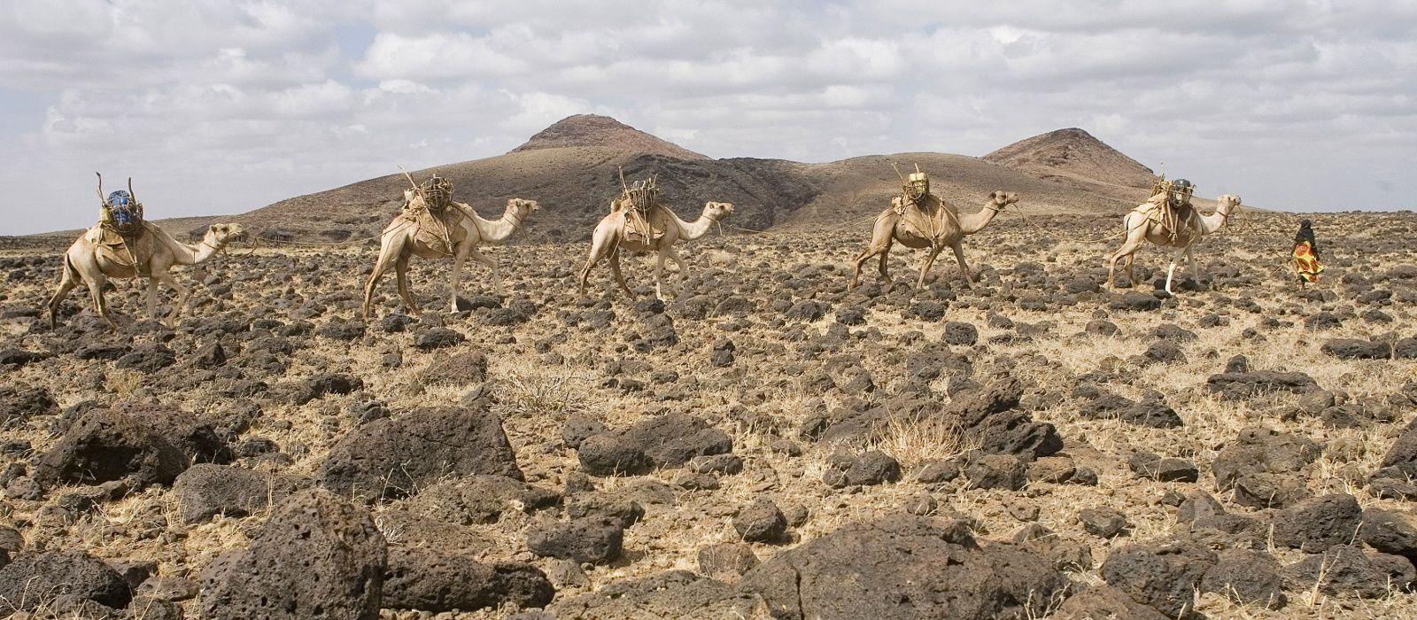 Image result for caravan of camels in chalbi desert