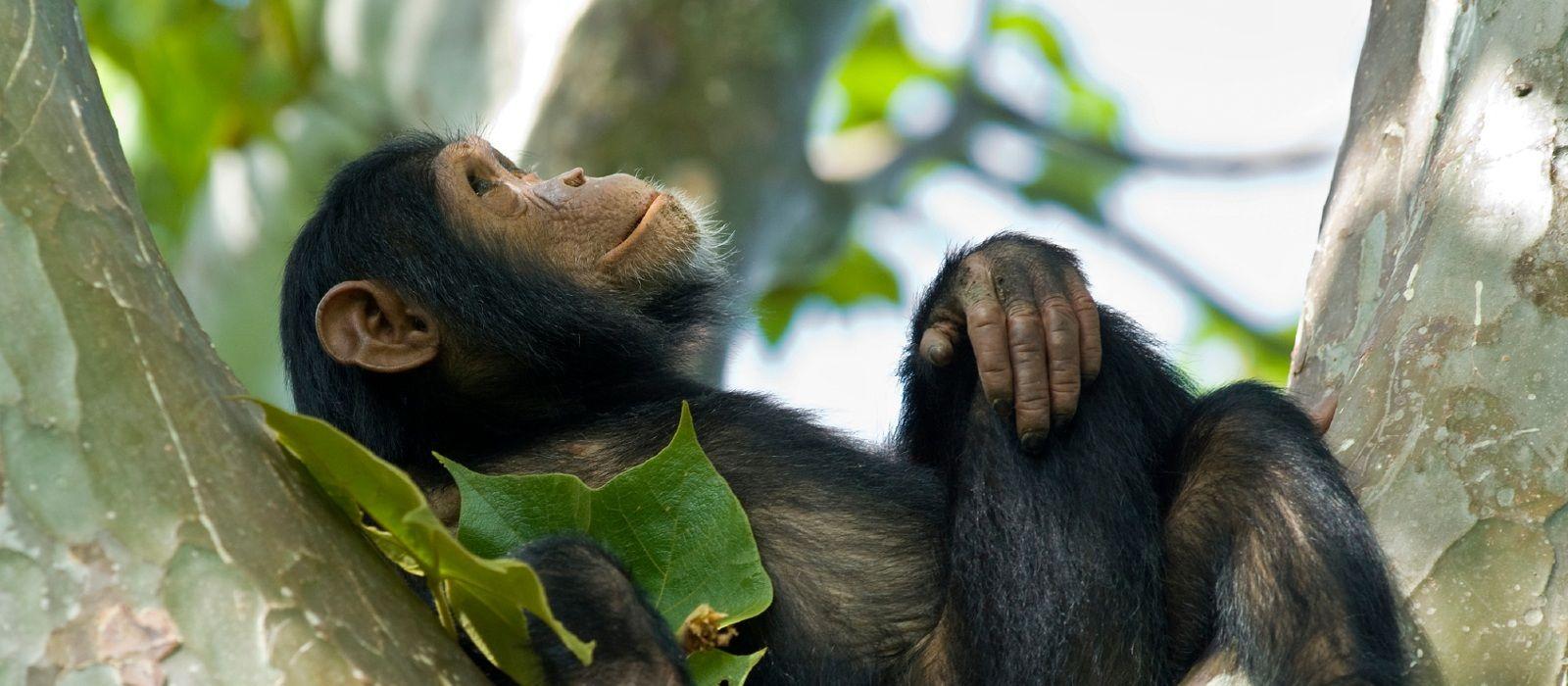 Destination Nyungwe Rwanda