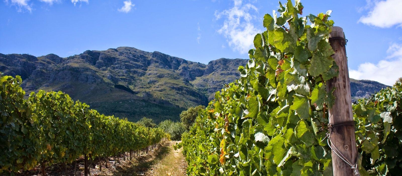Südafrikas Wildnis entdecken – West Kap und Krüger Nationalpark Urlaub 2