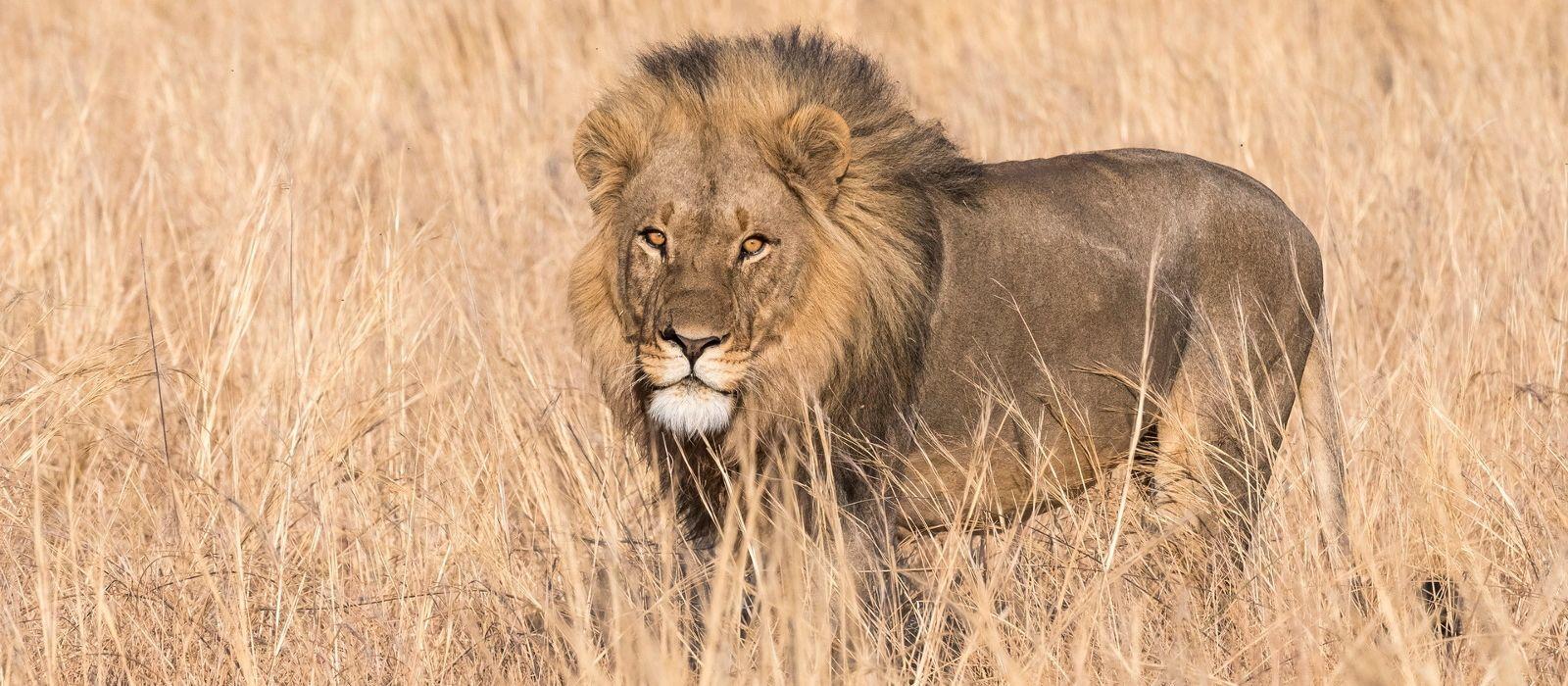 Südafrika, Simbabwe & Botswana: Magische Wasserwelten & Abenteuer Rovos Rail Urlaub 2