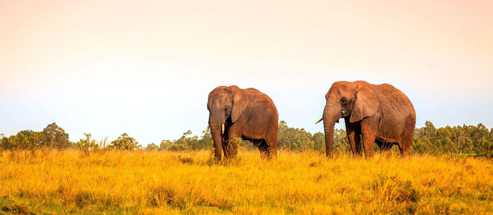 Destination Garden Route South Africa