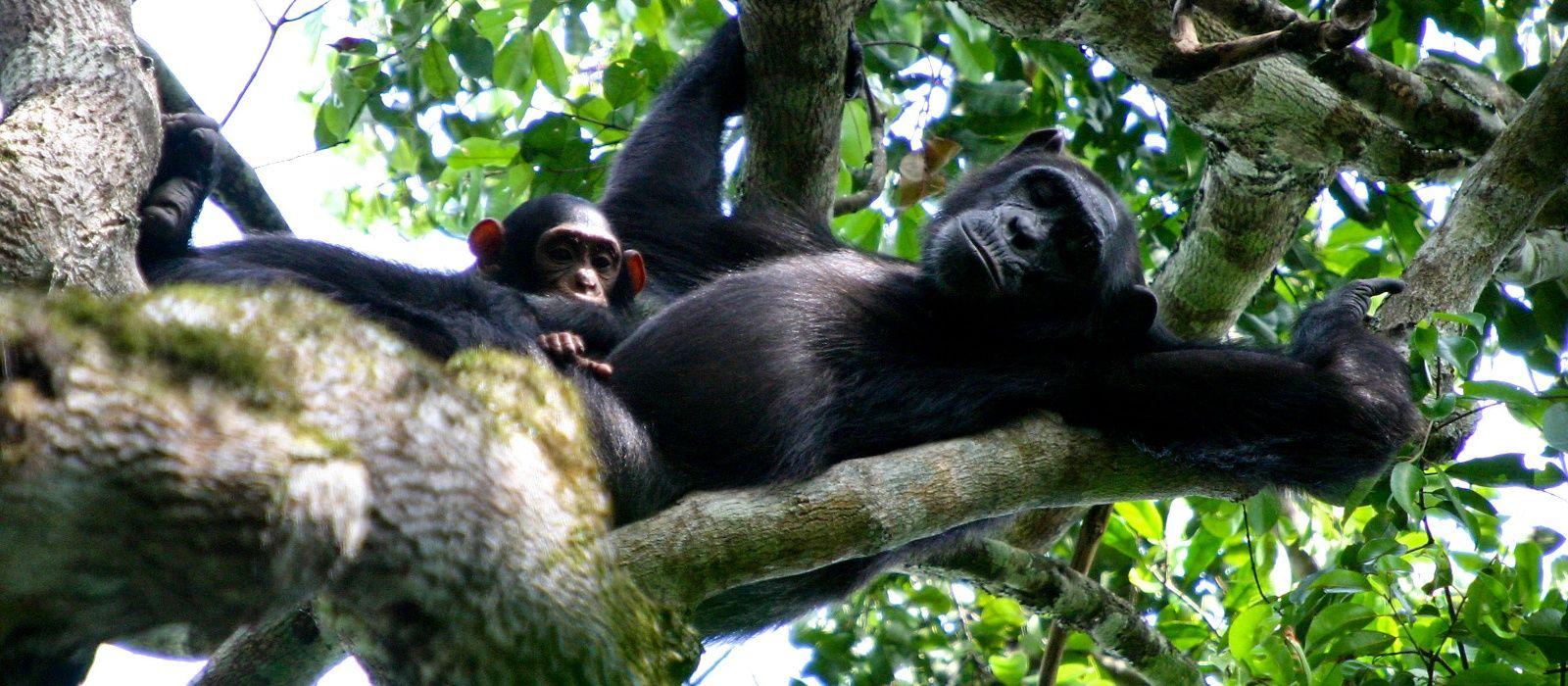 Destination Semliki Uganda
