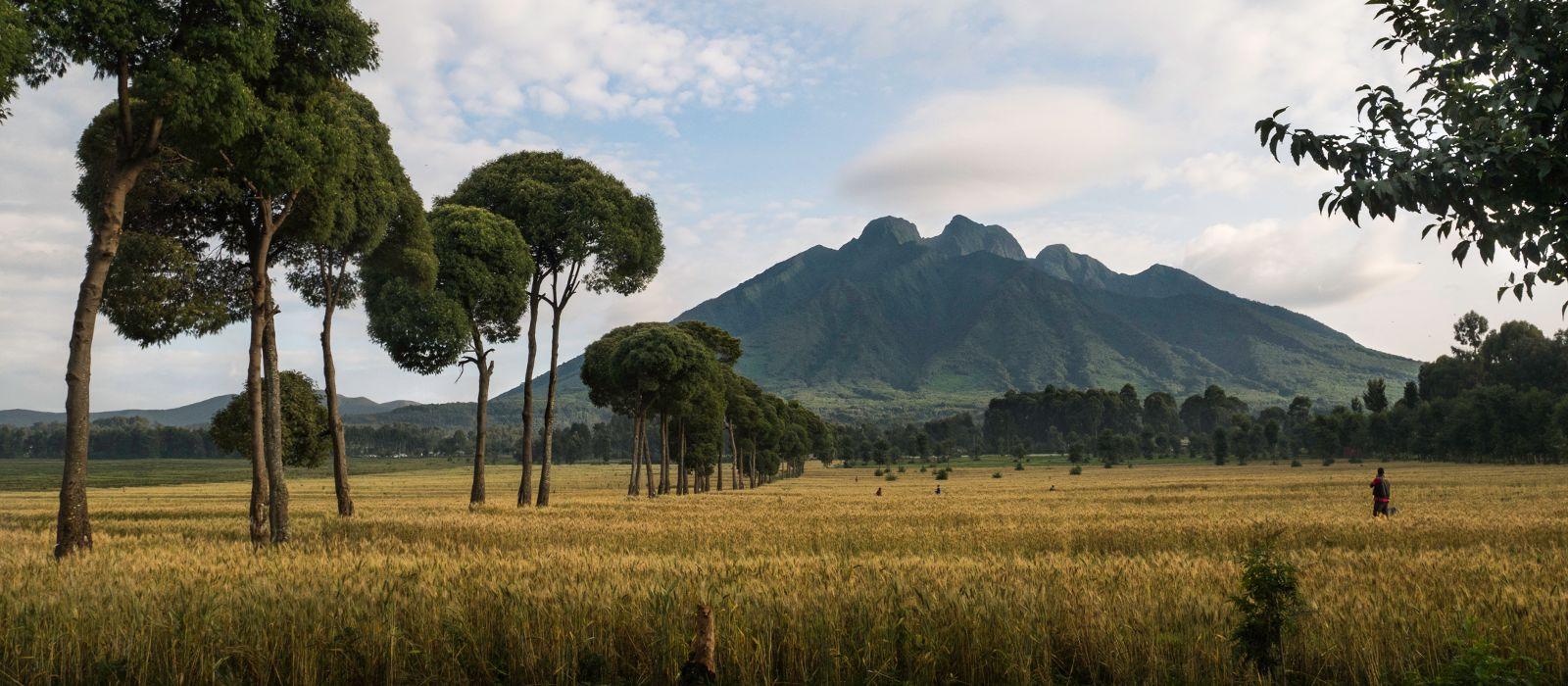 Tansania und Ruanda: Gorilla Trekking und Safari Abenteuer Urlaub 3