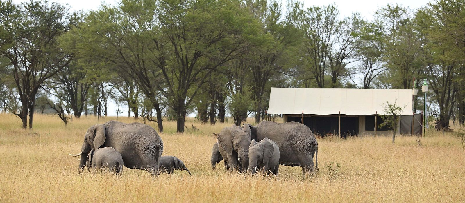 Hotel Kimondo Migration Camp (North) Tanzania