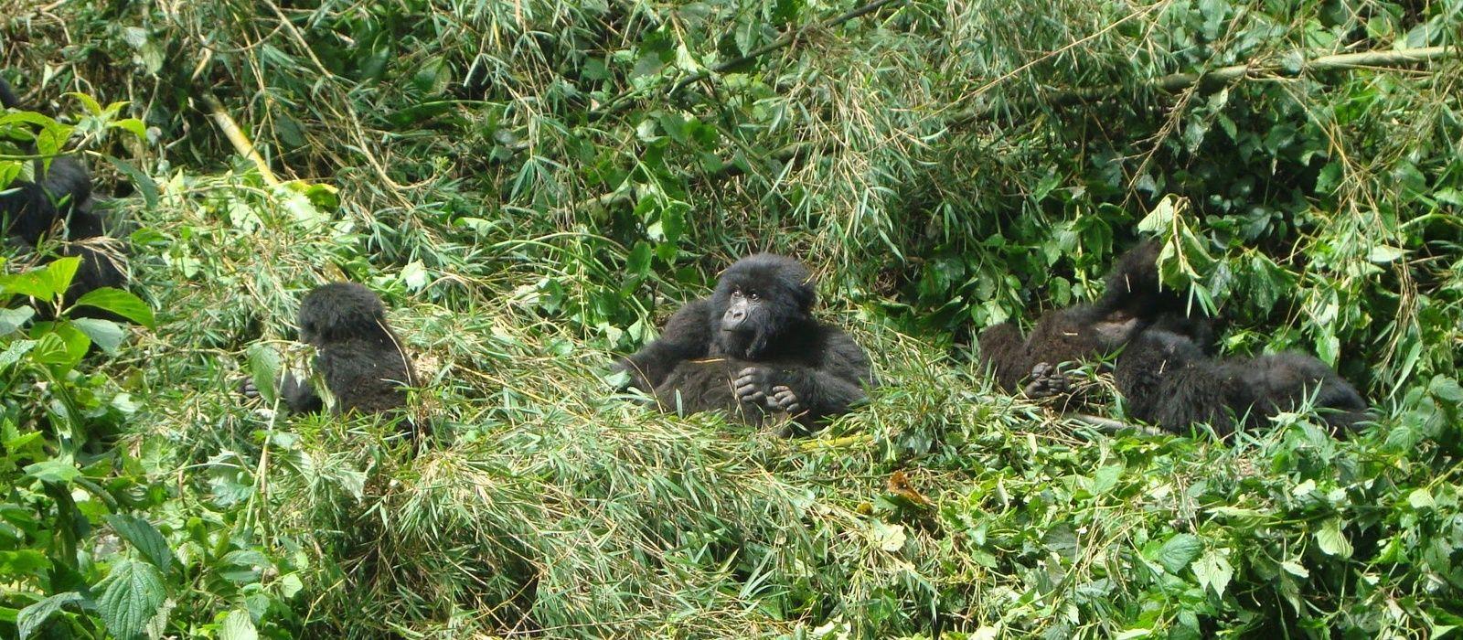Destination Volcanoes National Park Rwanda