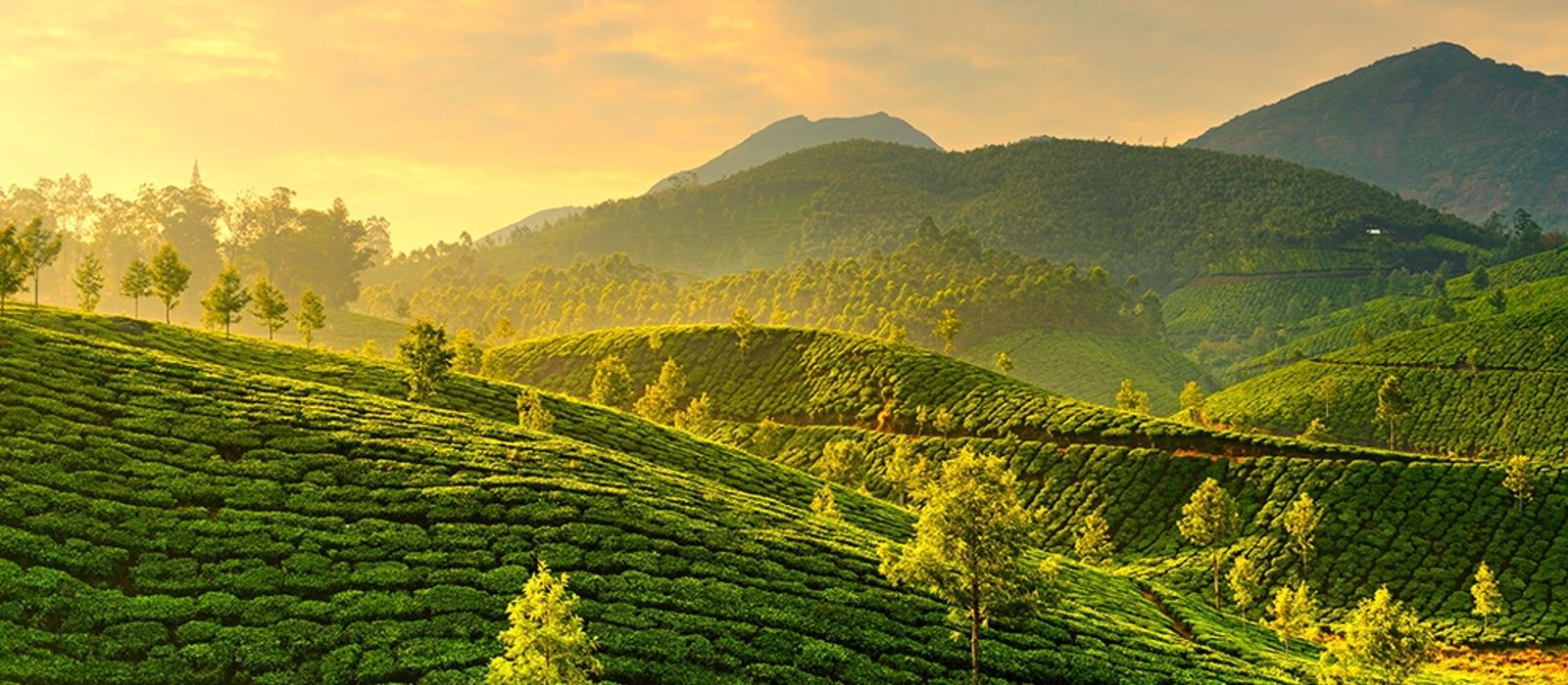 Destination Munnar South India