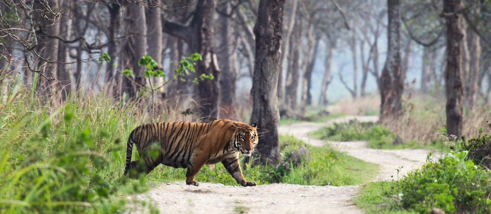 Nordindien Rundreise: Städte, Tempel & Safaris Urlaub 3