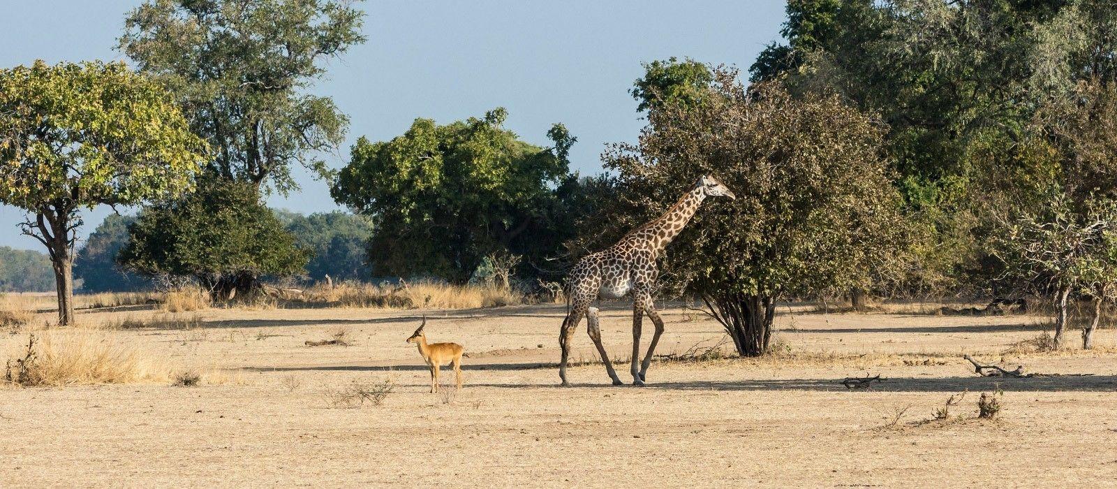 Abenteuerreise: Sambia, Malawi & Mosambik für Entdecker Urlaub 1