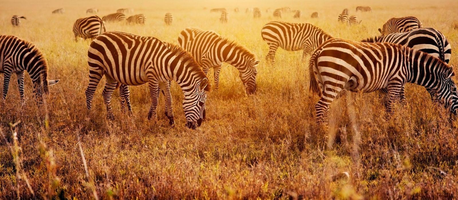 Tansania und Ruanda: Gorilla-Trekking, Safari und Viktoriasee Urlaub 5
