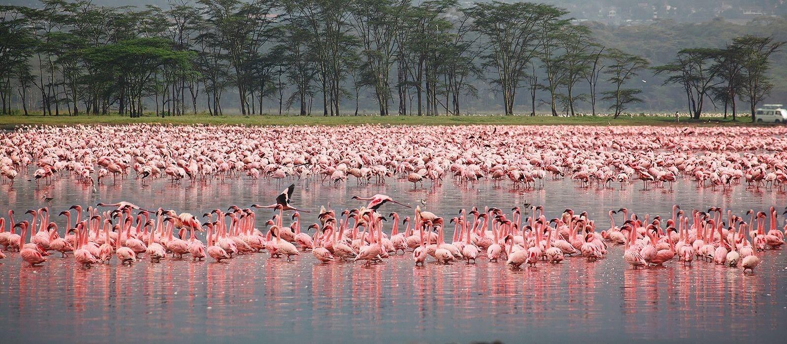 7 Days Lake Nakuru Safari