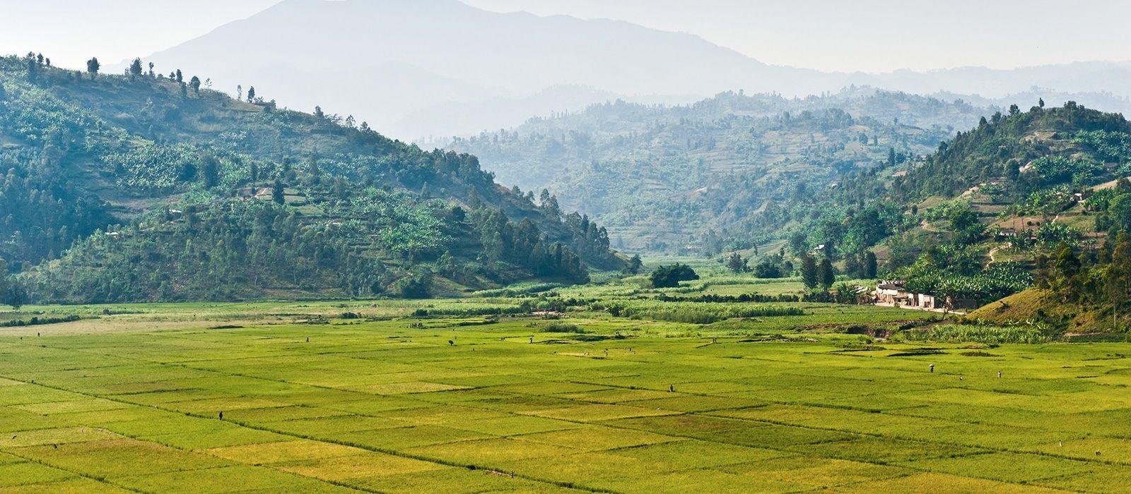 Gorilla Trekking in Rwanda Tour Trip 2