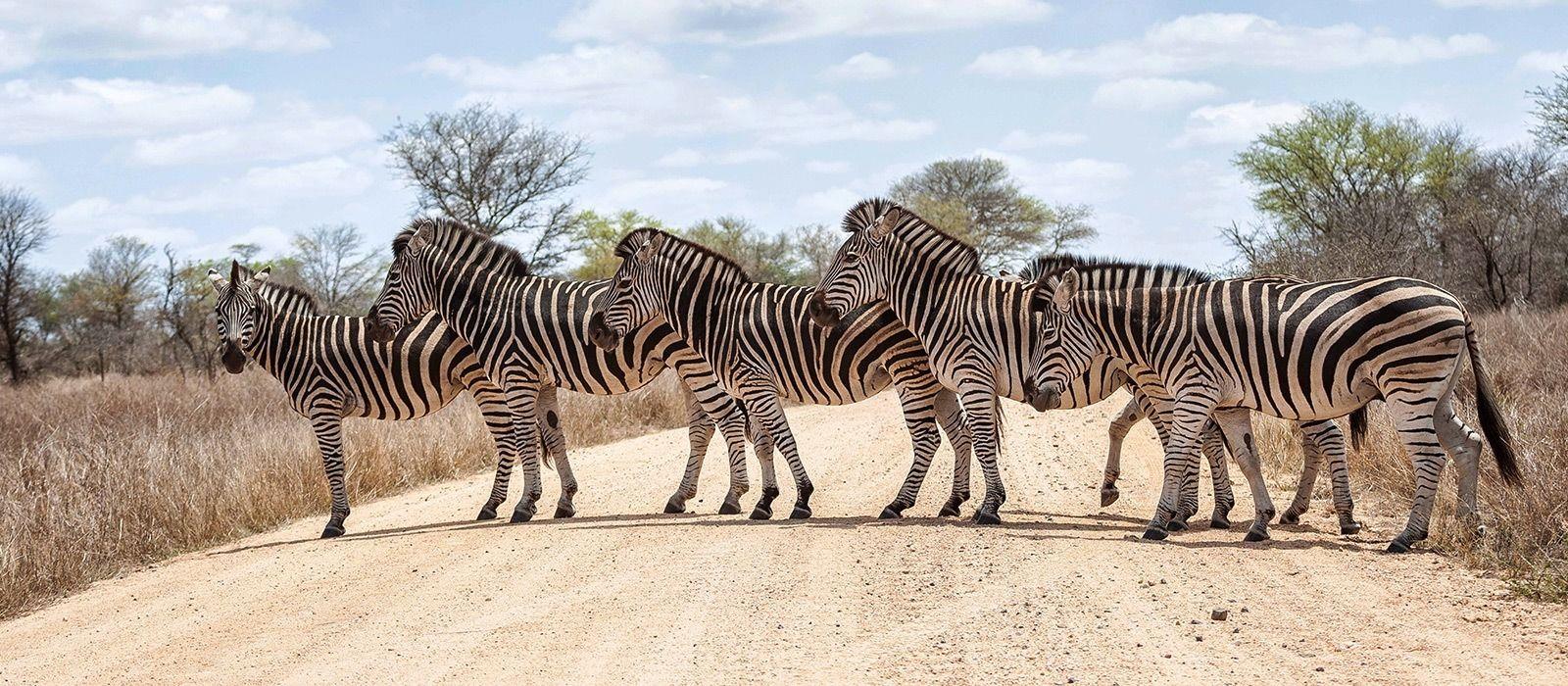 Reiseziel Krüger Südafrika