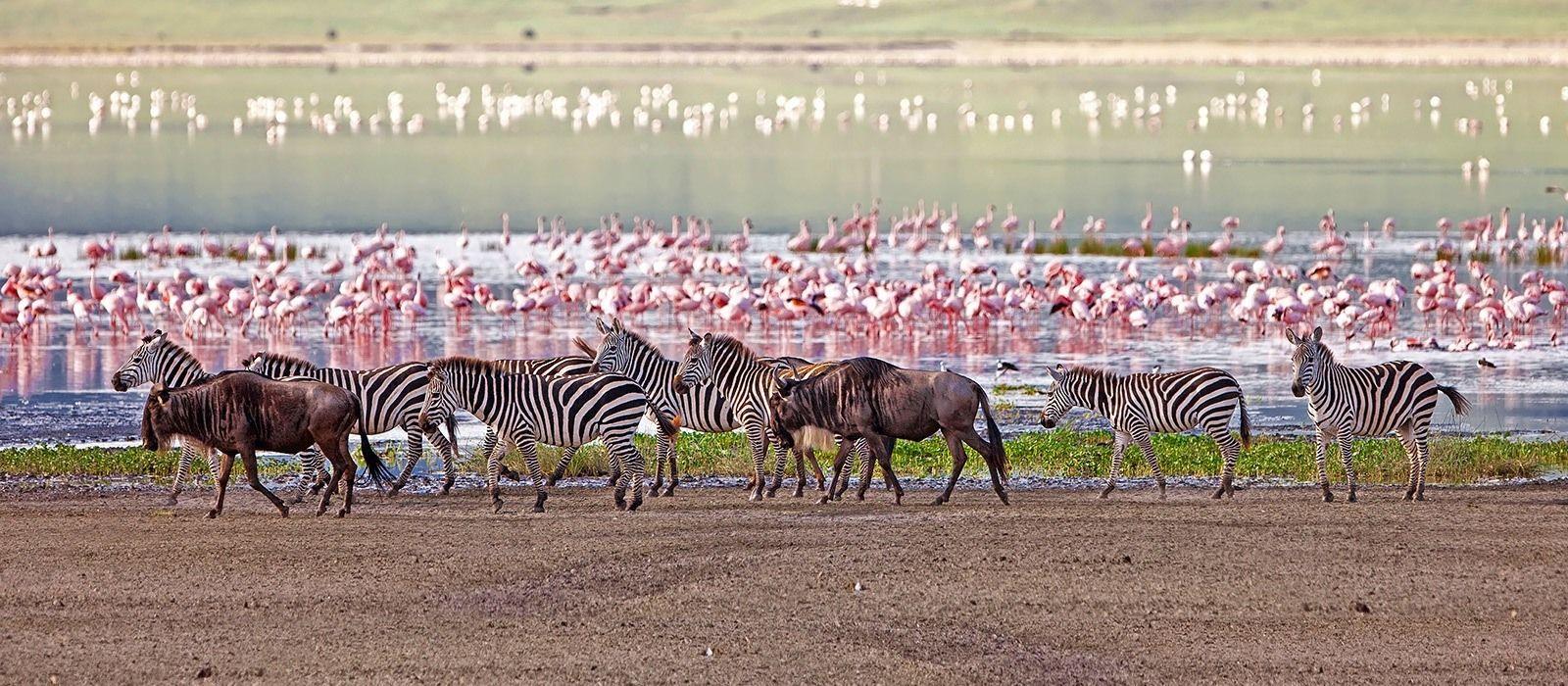 Lakeside Luxury, Wilderness and Wildlife in Tanzania Tour Trip 5