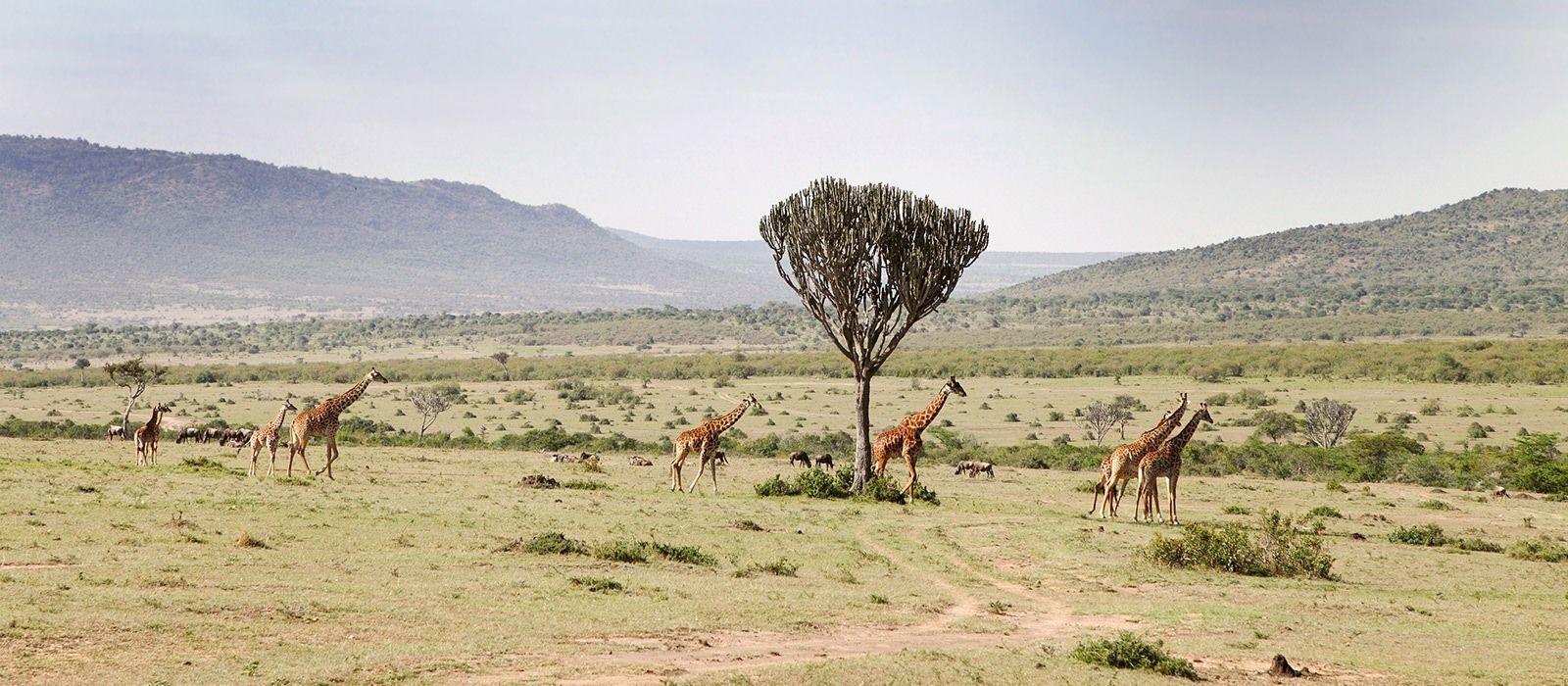 Tanzania: From Kilimanjaro to Zanzibar Tour Trip 3