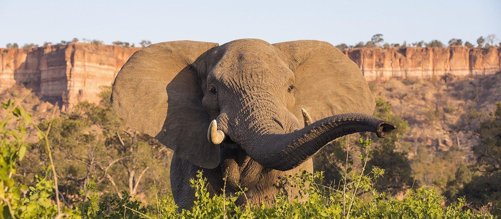 Reiseziel Gonarezhou Simbabwe