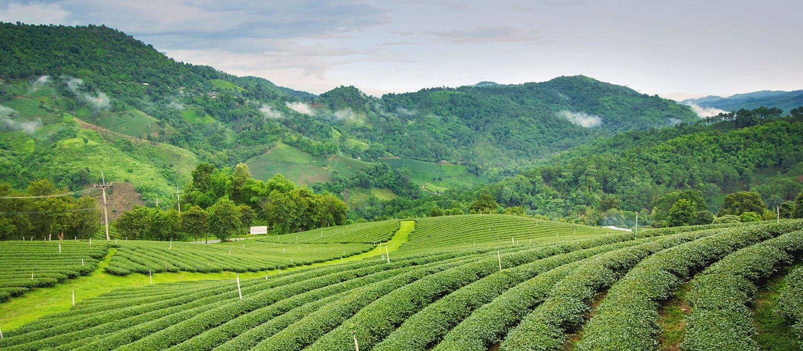 exclusive travel tips for your destination darjeeling in east india
