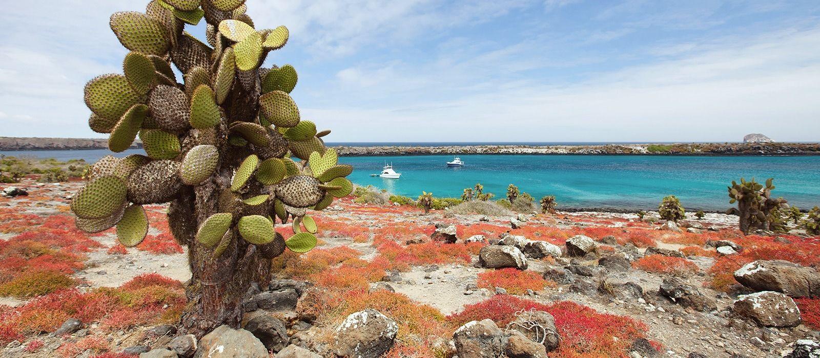 Reiseziel Santa Cruz Ecuador/Galapagos
