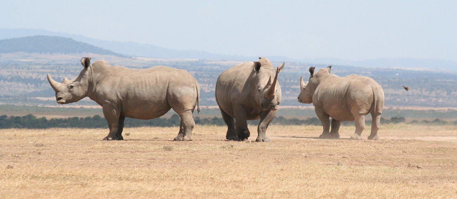 Von Kenia bis Sansibar: Safaris & Strände Urlaub 3