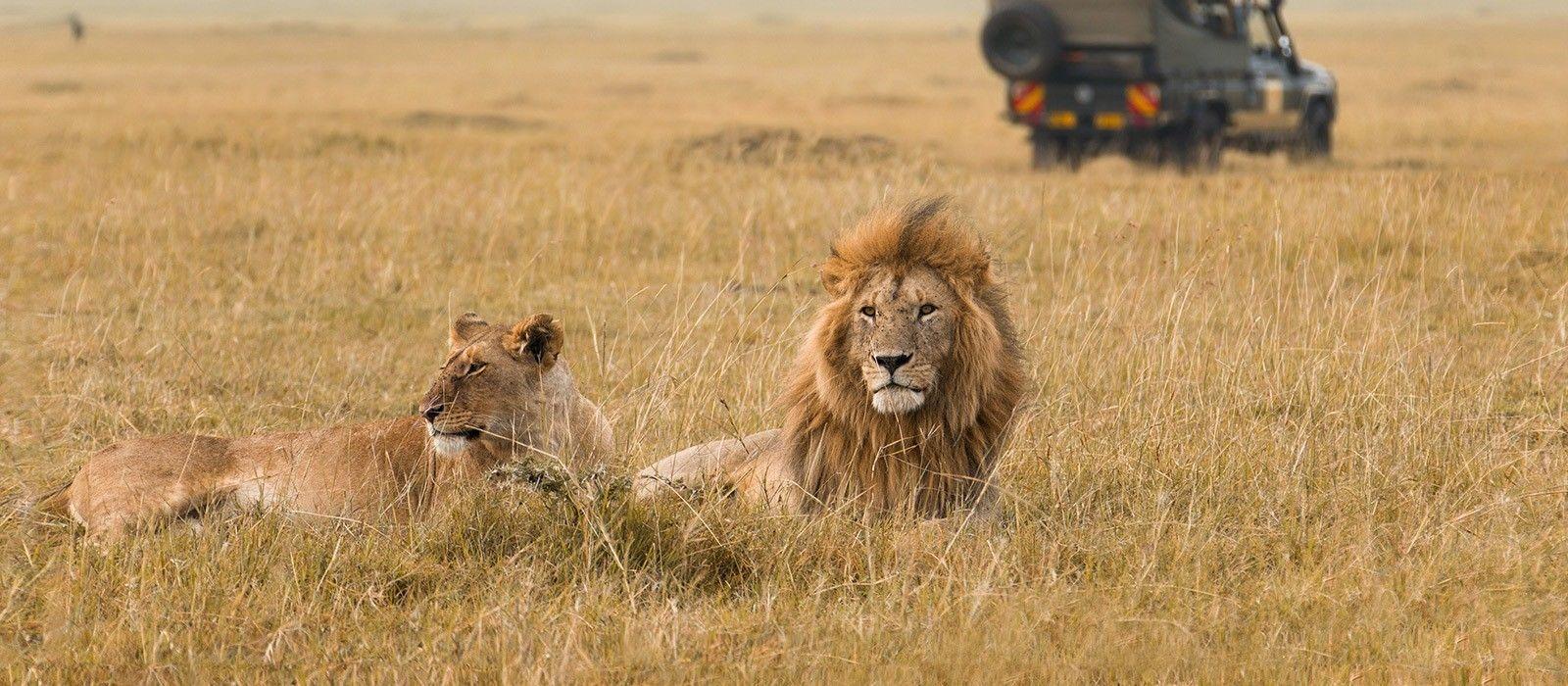 Kenia & Tansania Safarireise: Ungezähmte Wildnis Urlaub 3