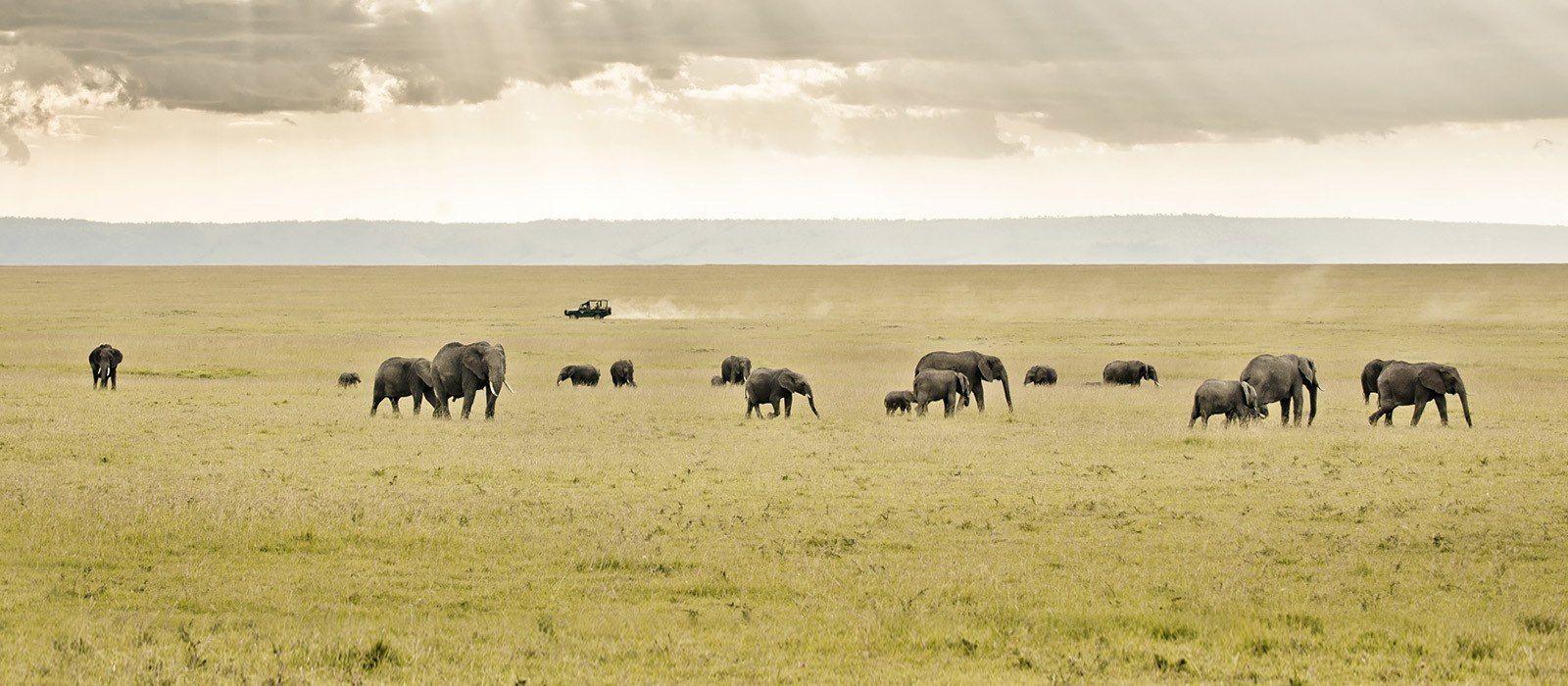 Kenia – Safari und Baden: Masai Mara & Traumstrände Urlaub 4