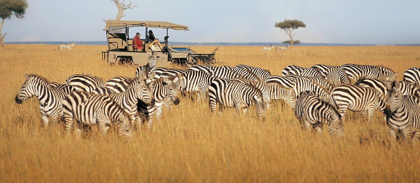 Kenia & Sansibar Reise: Safaris & Strände Urlaub 2