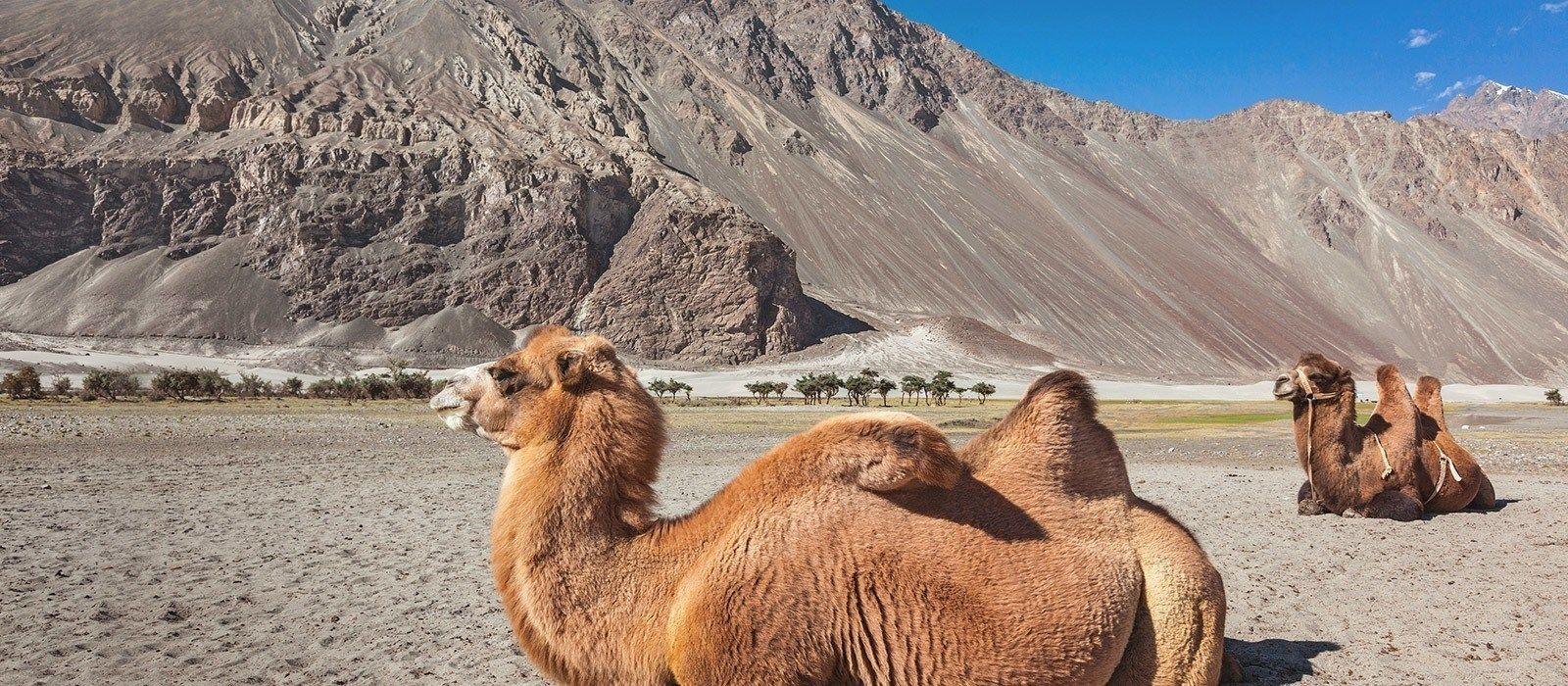 Luxuriöses Nordindien und der Himalaya Urlaub 6