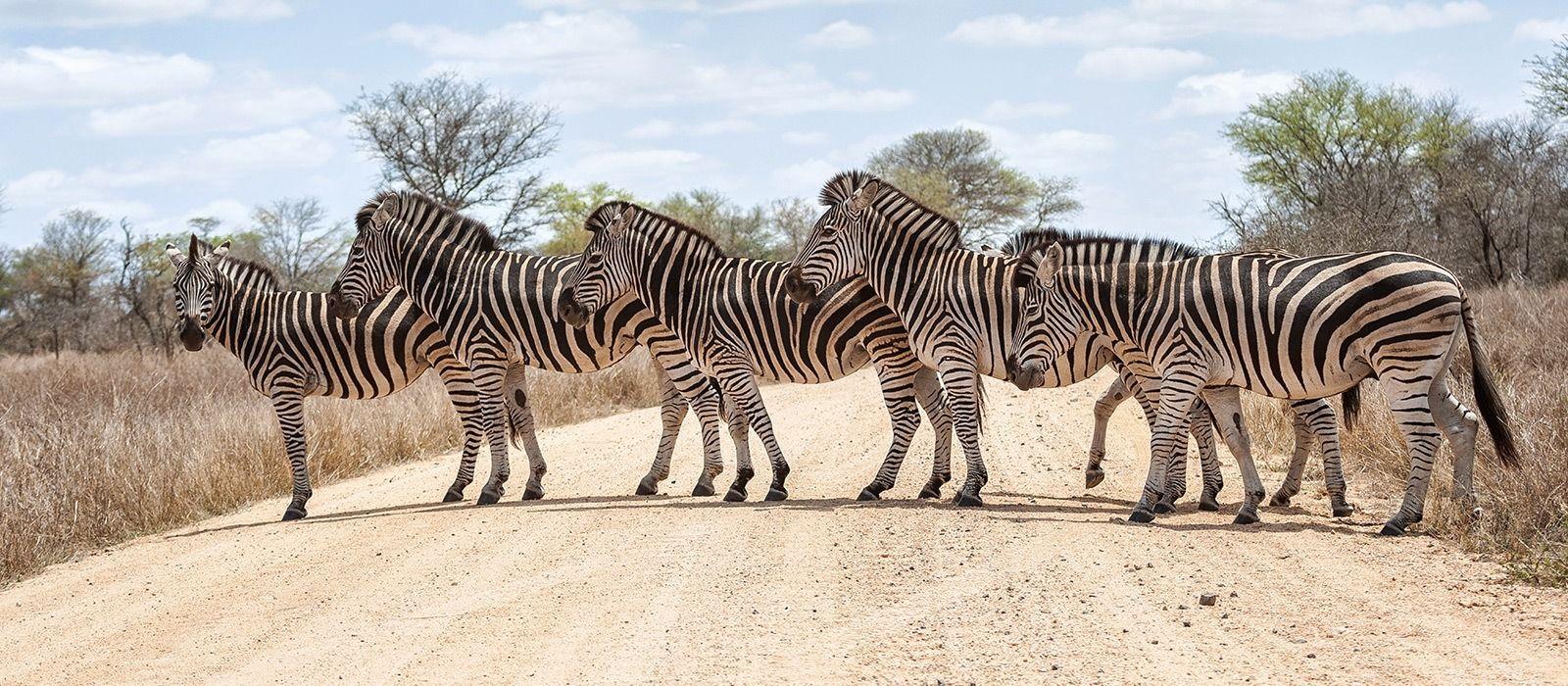 Cape, Kruger & Victoria Falls Tour Trip 2