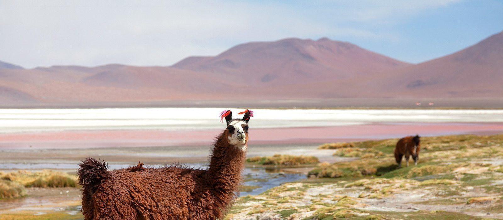 Reiseziel Ojo de Perdiz Bolivien