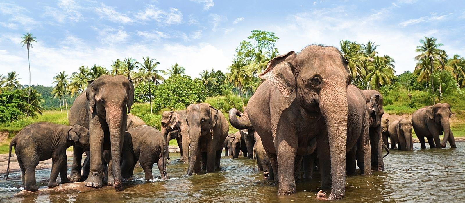 Culture and Beach Wonders of Sri Lanka Tour Trip 5
