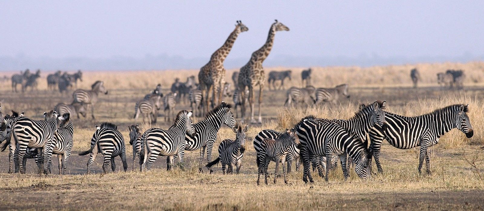 Destination Serengeti (Central) Tanzania