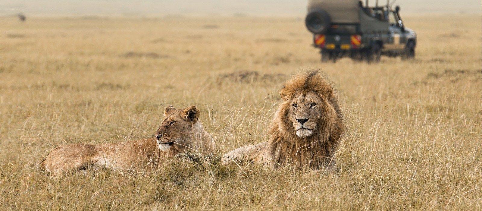 Luxus am See, Wildnis und wilde Tiere in Tanzania Urlaub 1