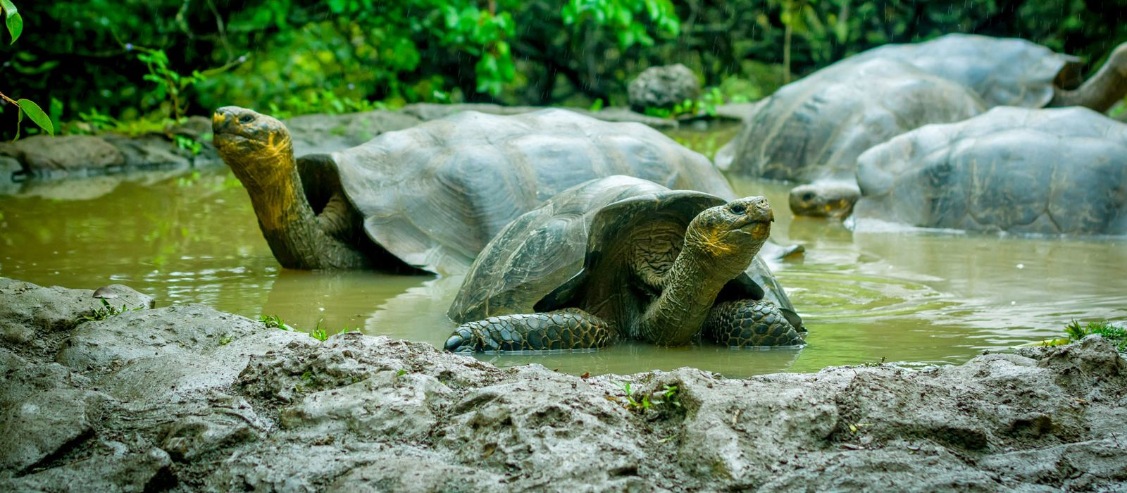 Galapagos: Nature's Secrets Revealed Tour Trip 4