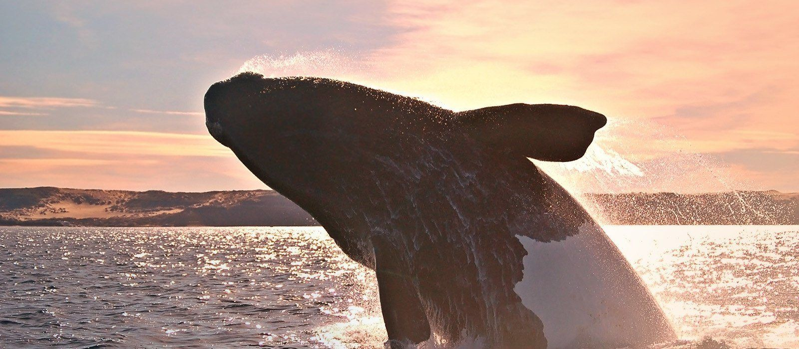 Argentina: Waterfalls, Whales and Gauchos Tour Trip 3