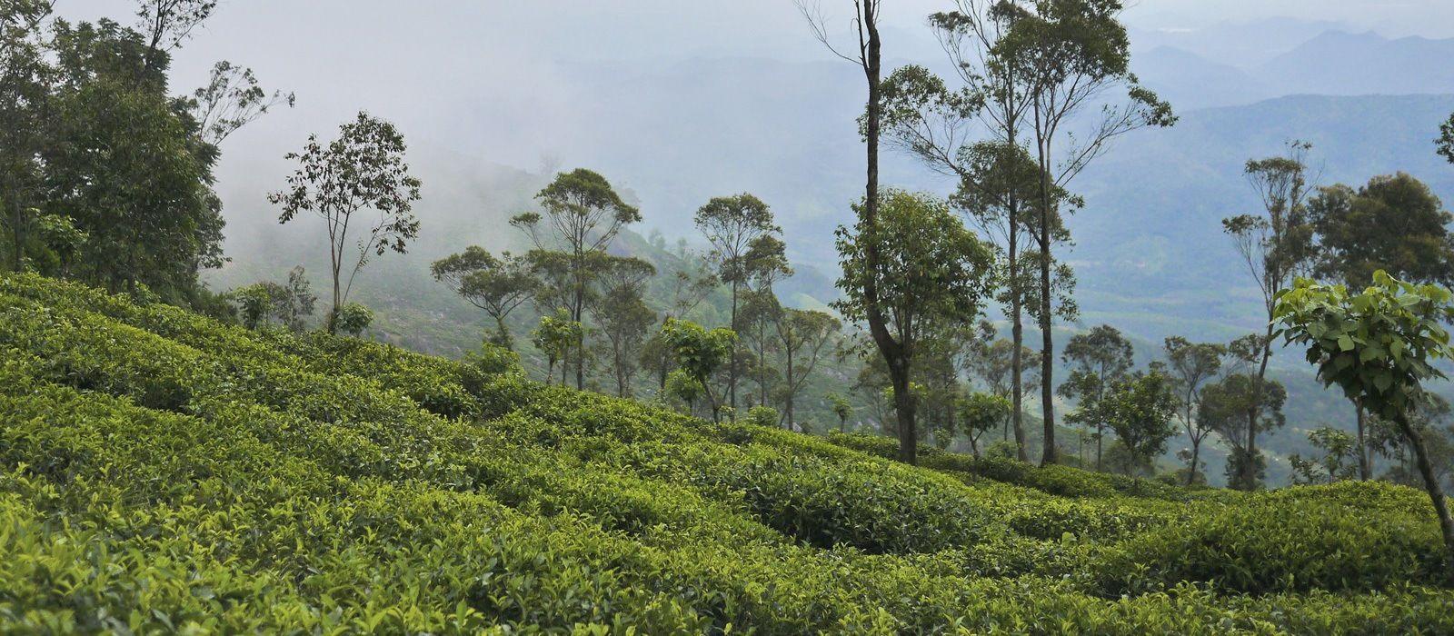 Simply Sri Lanka: Temples and Tea Tour Trip 2