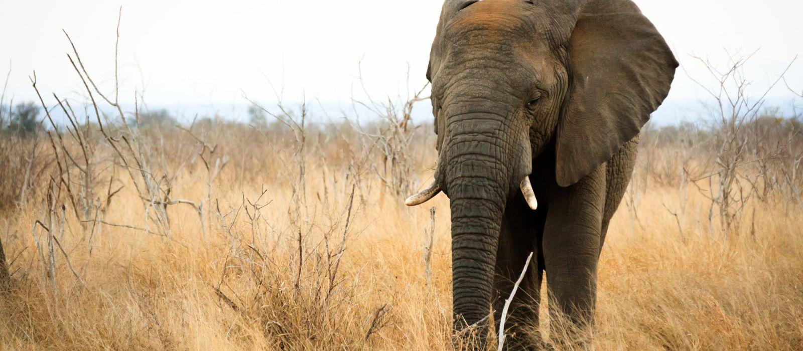 ESwatini (Swaziland) Tours & Trips