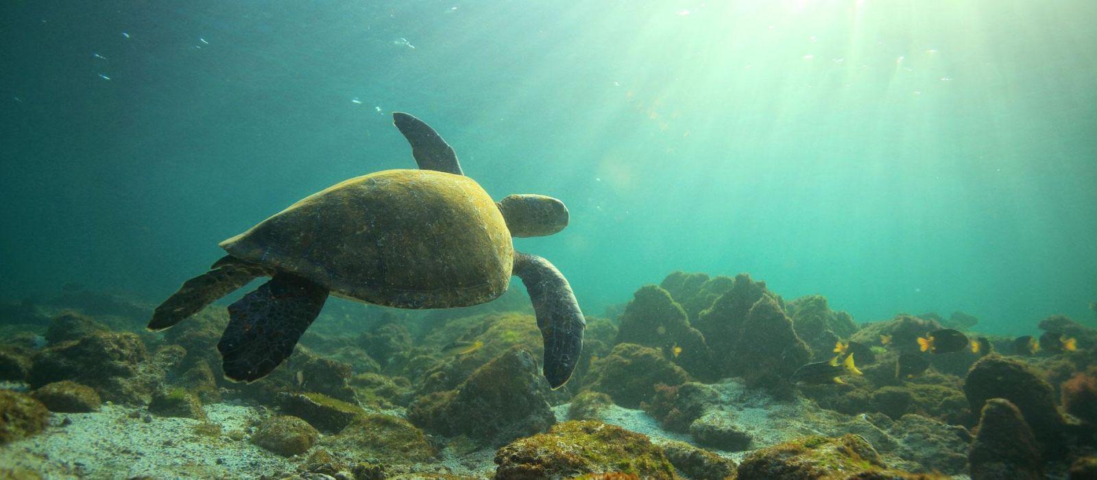 Reiseziel Galapagos Ecuador/Galapagos