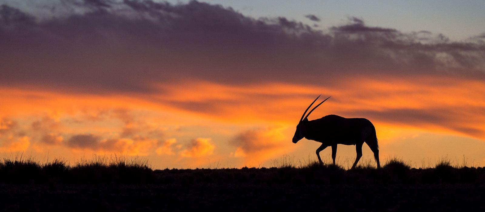 Von Sossusvlei zum Caprivi Streifen: Namibias Naturwunder Urlaub 1
