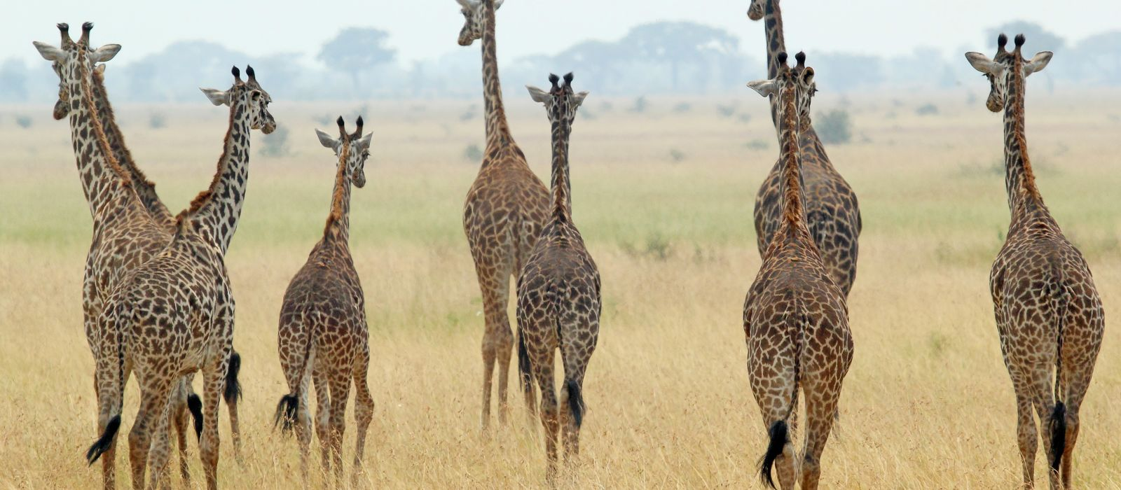 Tansania: Safari Abenteuer & romantisches Sansibar Urlaub 3