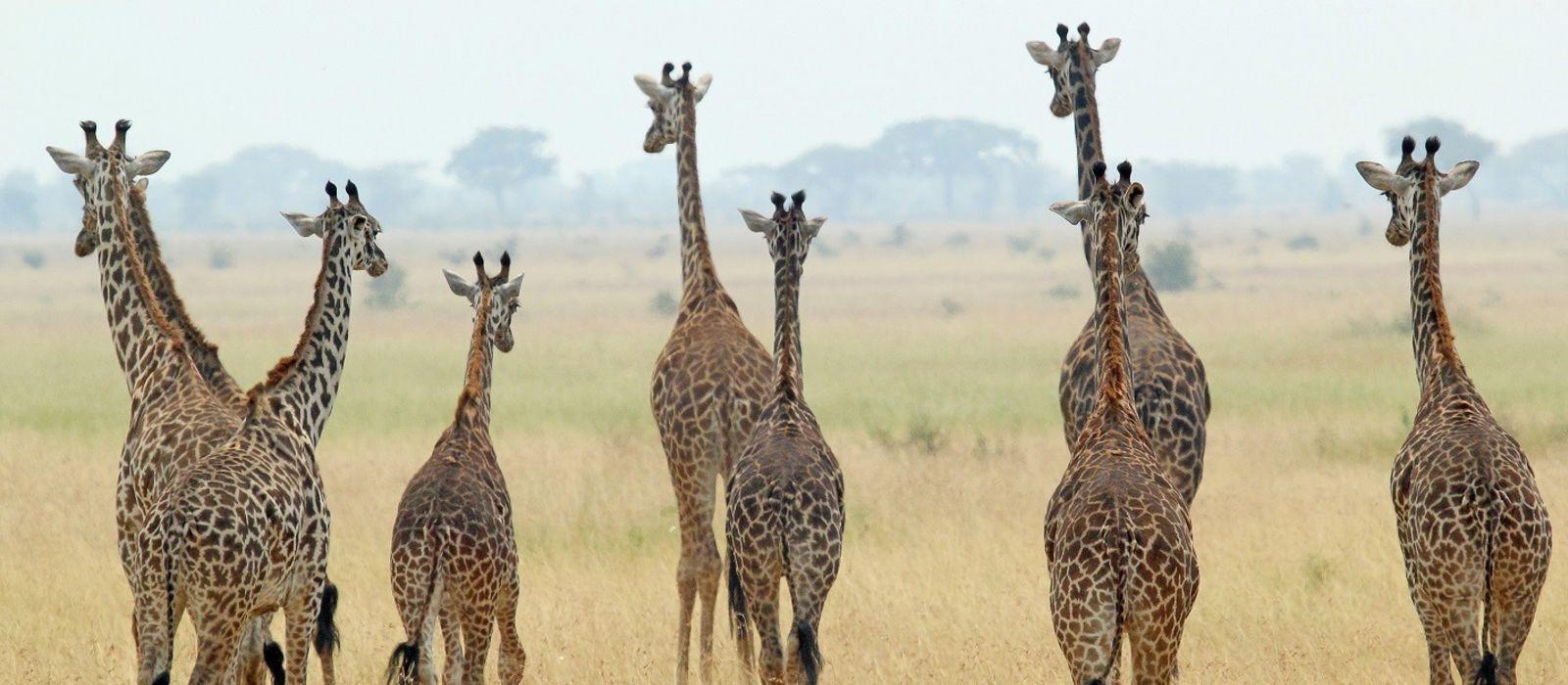 Ins wilde Herz Tansanias – Luxus genießen und Gutes tun Urlaub 1