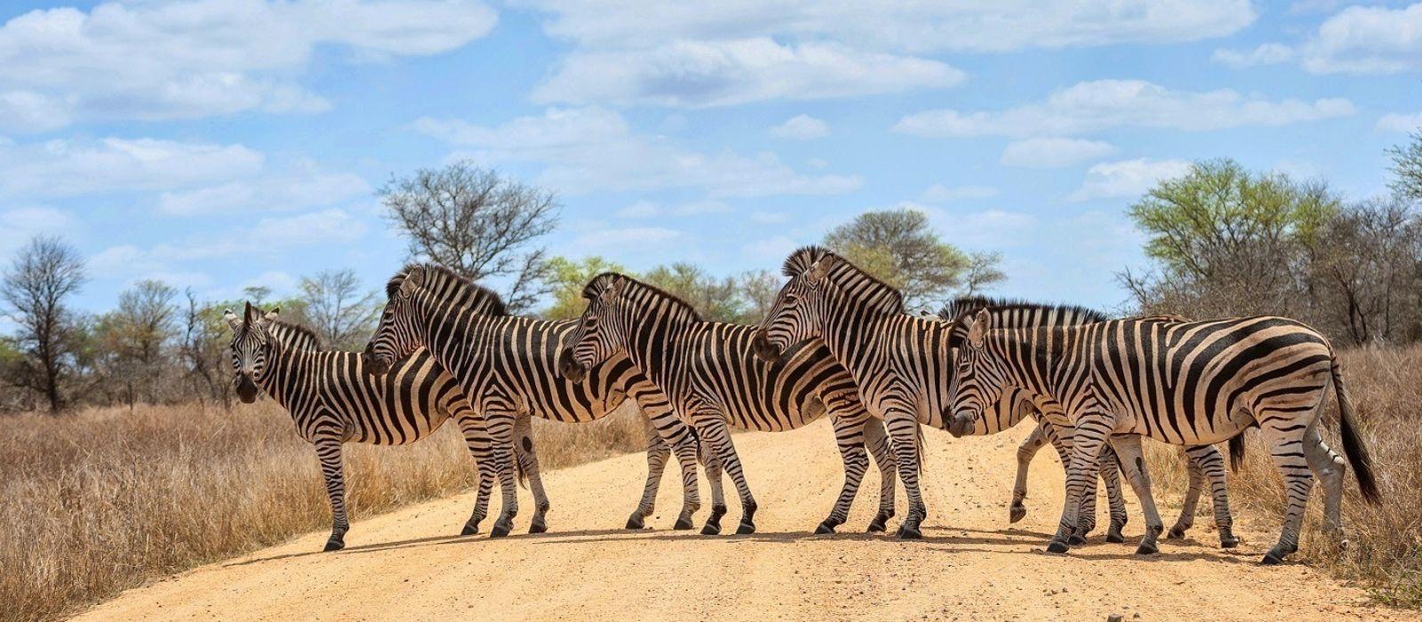 Sambia und Südafrika: Kapstadt, Safari und Viktoriafälle Urlaub 2