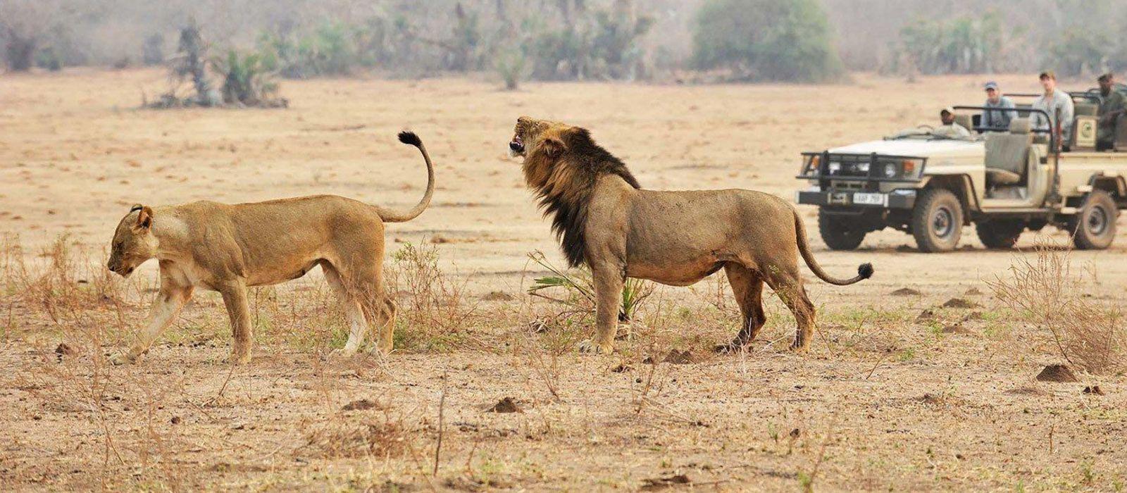 Authentic Tanzania: Wildlife and Pristine Beach Tour Trip 1