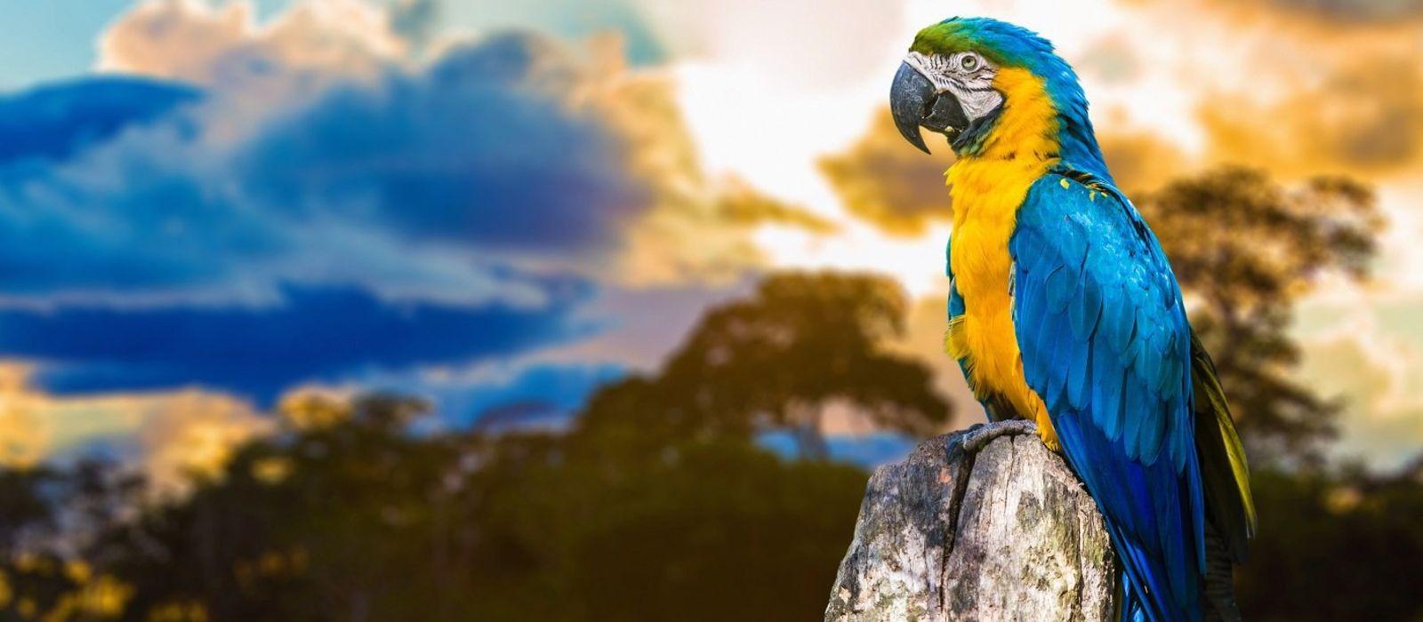 Brazil: Thrilling Waterfalls, Pantanal & The Amazon Tour Trip 4