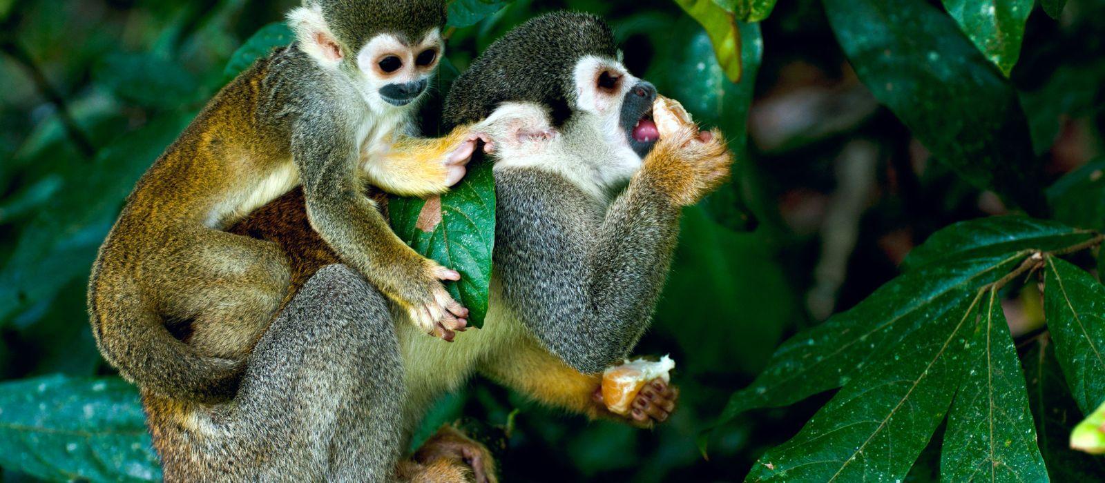 Brasilien Naturreise: Wasserfälle, Pantanal und Amazonas Urlaub 3