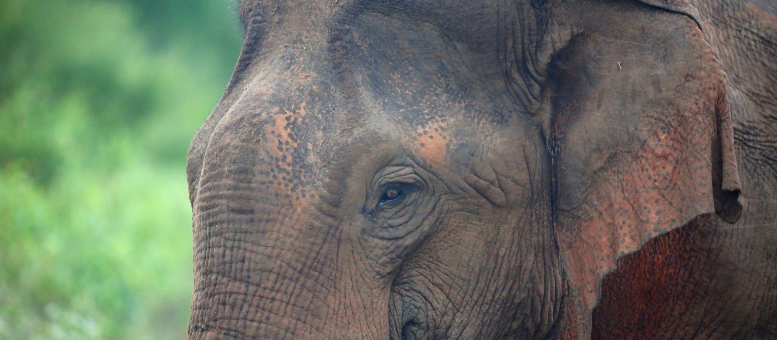 Reiseziel Udawalawe Sri Lanka