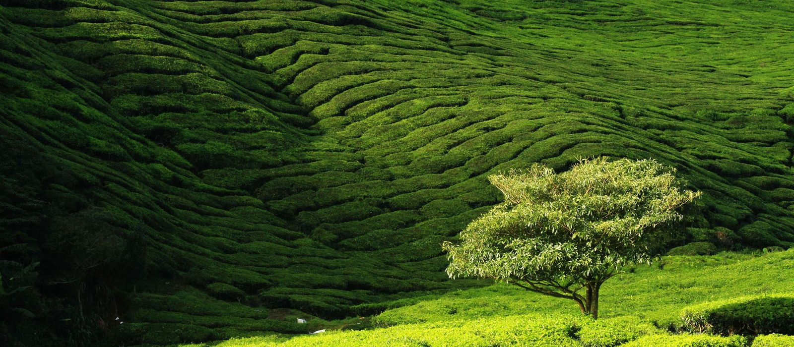 Höhepunkte der Halbinsel Malaysia Urlaub 2