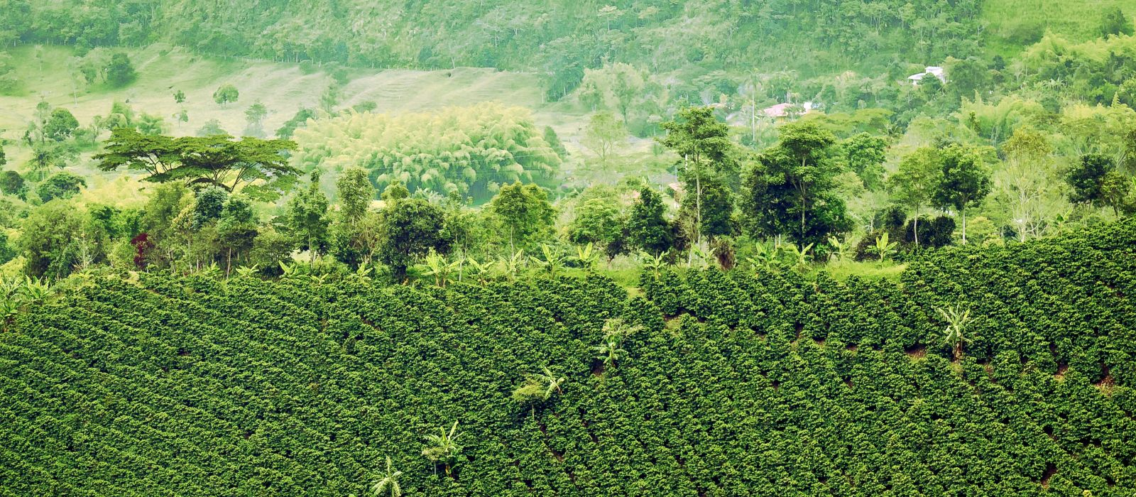 Reiseziel Armenia Kolumbien