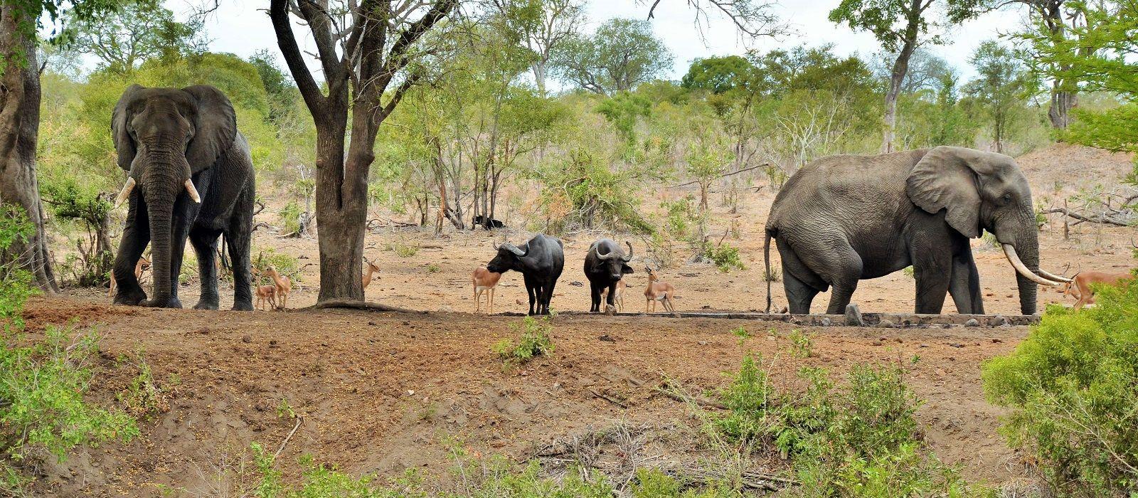 Destination Kruger South South Africa